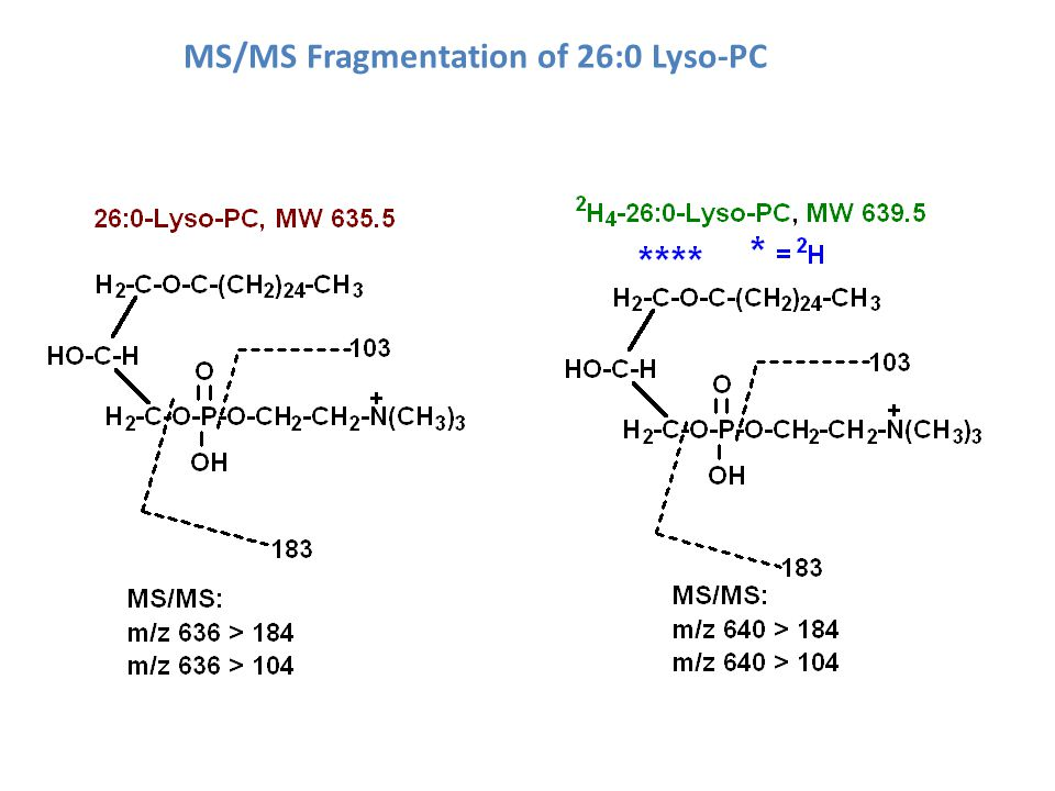 MS/MS Fragmentation of 26:0 Lyso-PC