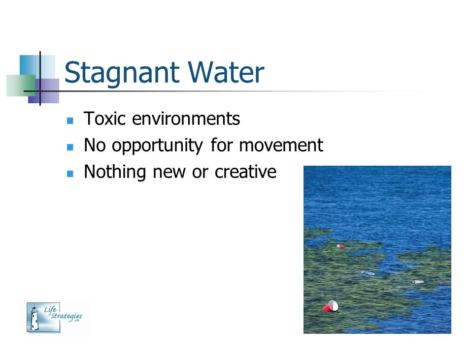 Stagnant Water Toxic environments No opportunity for movement