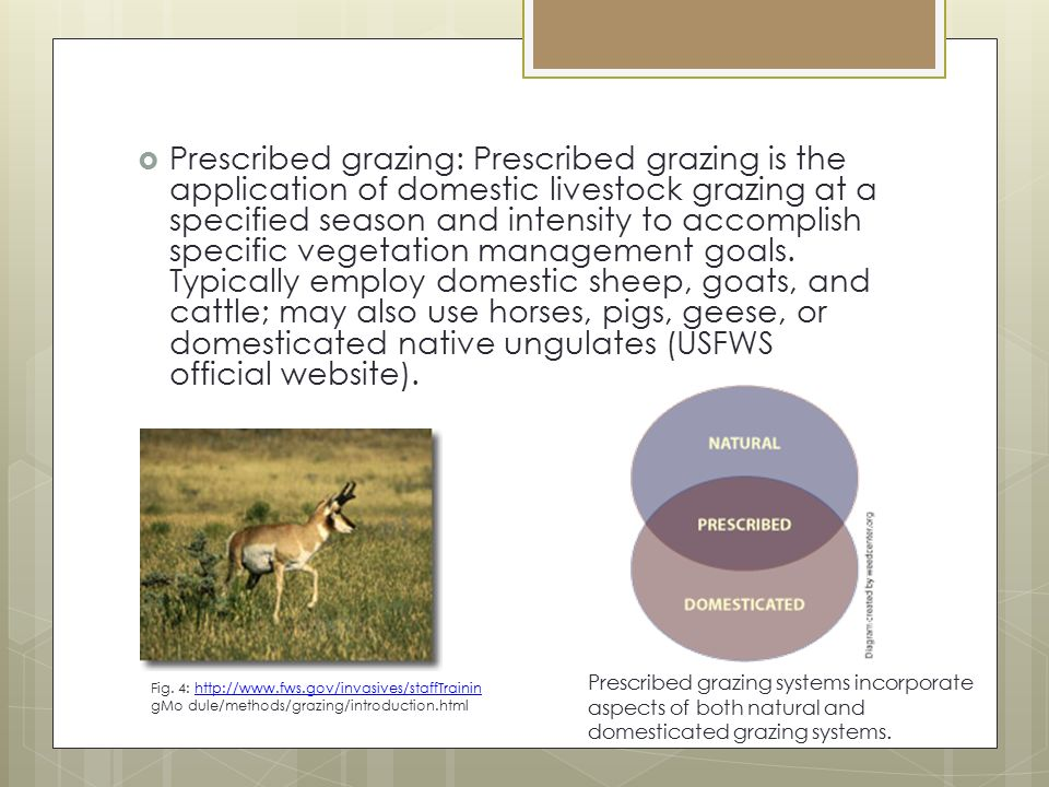 Prescribed grazing: Prescribed grazing is the application of domestic livestock grazing at a specified season and intensity to accomplish specific vegetation management goals. Typically employ domestic sheep, goats, and cattle; may also use horses, pigs, geese, or domesticated native ungulates (USFWS official website).