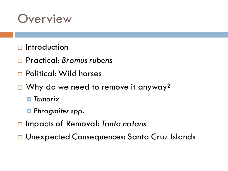Overview Introduction Practical: Bromus rubens Political: Wild horses