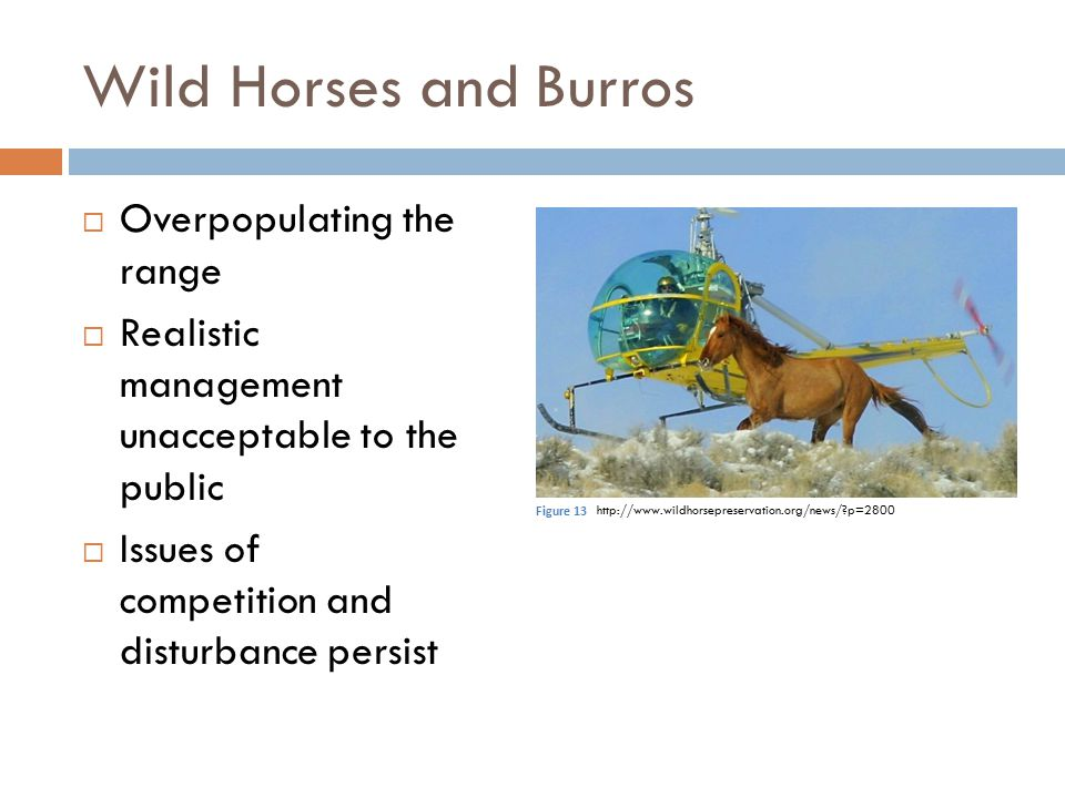 Wild Horses and Burros Overpopulating the range