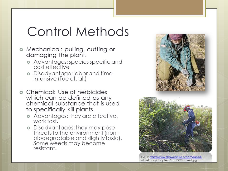 Control Methods Mechanical: pulling, cutting or damaging the plant.