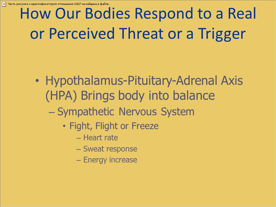 How Our Bodies Respond to a Real or Perceived Threat or a Trigger