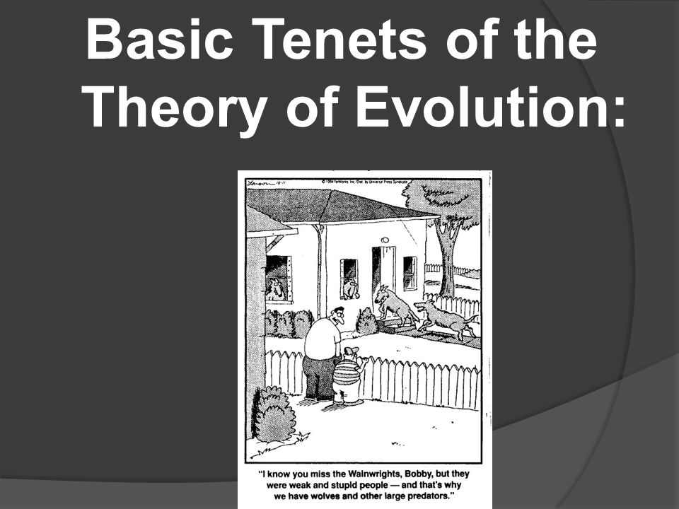 Basic Tenets of the Theory of Evolution: