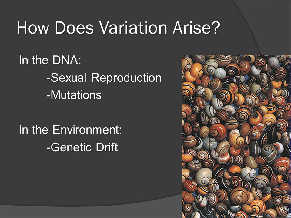 How Does Variation Arise