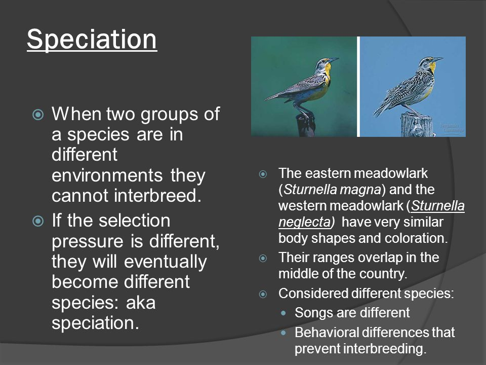 Speciation When two groups of a species are in different environments they cannot interbreed.