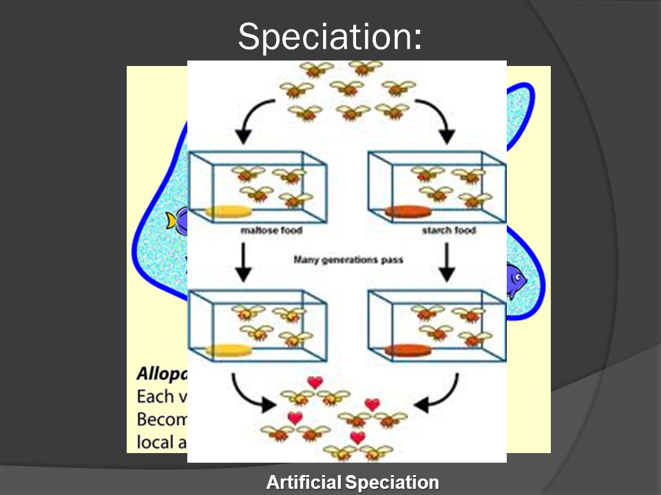 Artificial Speciation