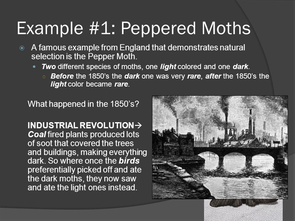 Example #1: Peppered Moths