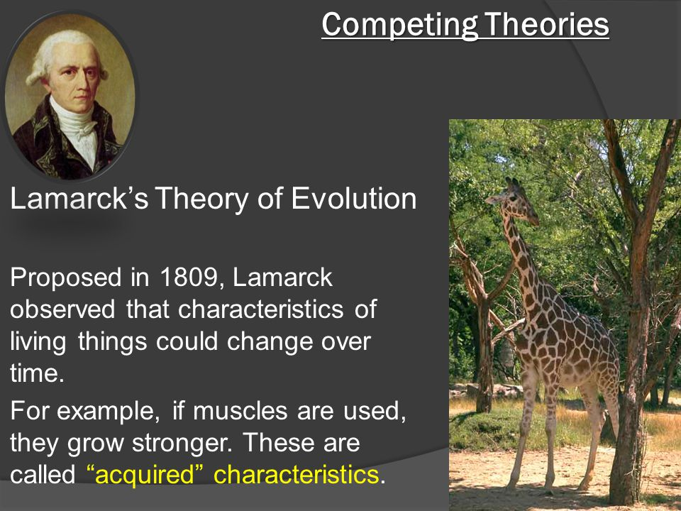 Competing Theories Lamarck's Theory of Evolution