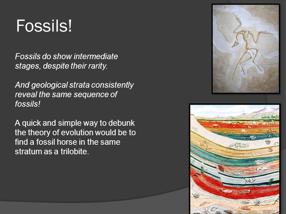 Fossils! Fossils do show intermediate stages, despite their rarity.
