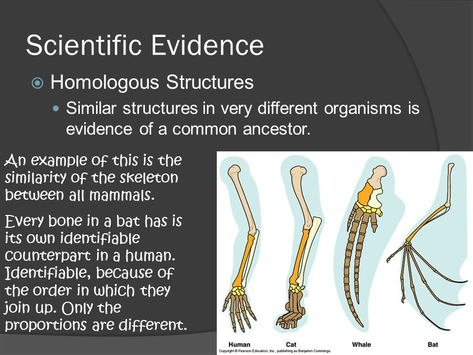 Scientific Evidence Homologous Structures