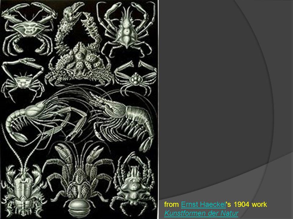 from Ernst Haeckel s 1904 work Kunstformen der Natur