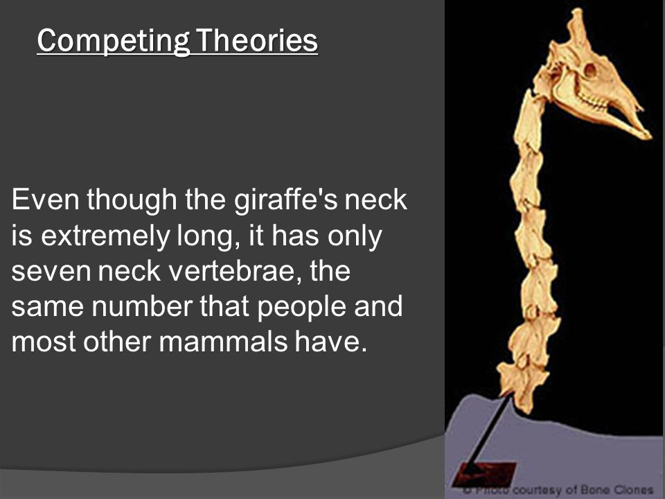 Competing Theories