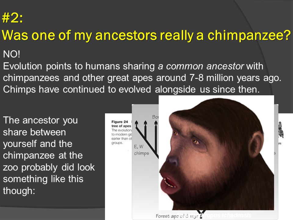 #2: Was one of my ancestors really a chimpanzee