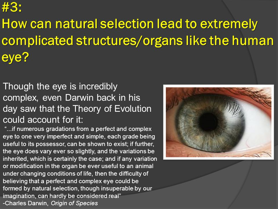 #3: How can natural selection lead to extremely complicated structures/organs like the human eye