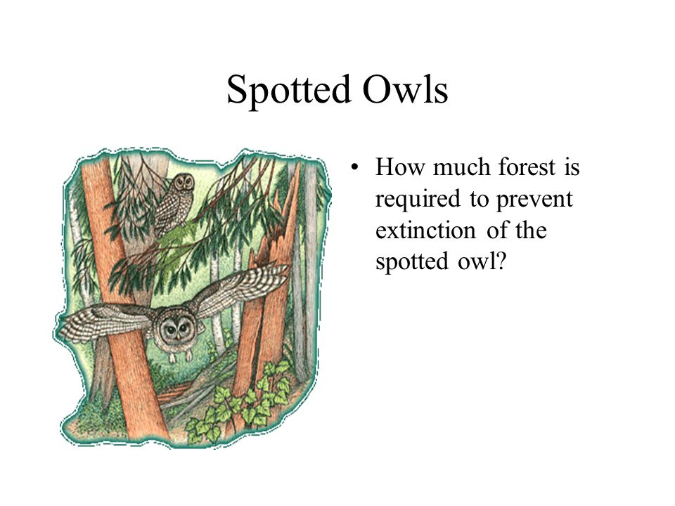 Spotted Owls How much forest is required to prevent extinction of the spotted owl