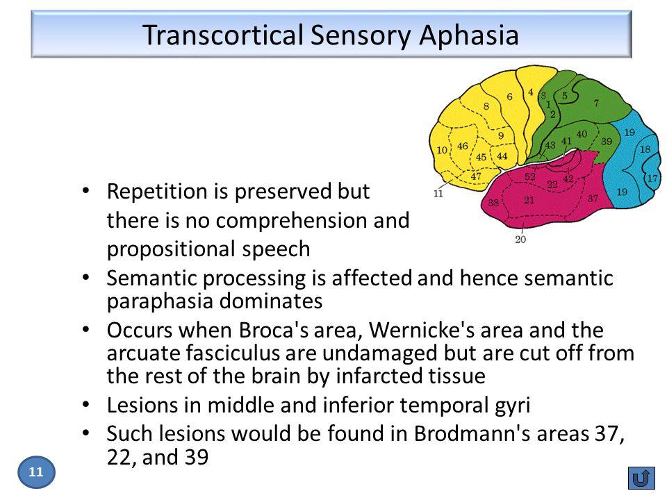 Transcortical Sensory Aphasia