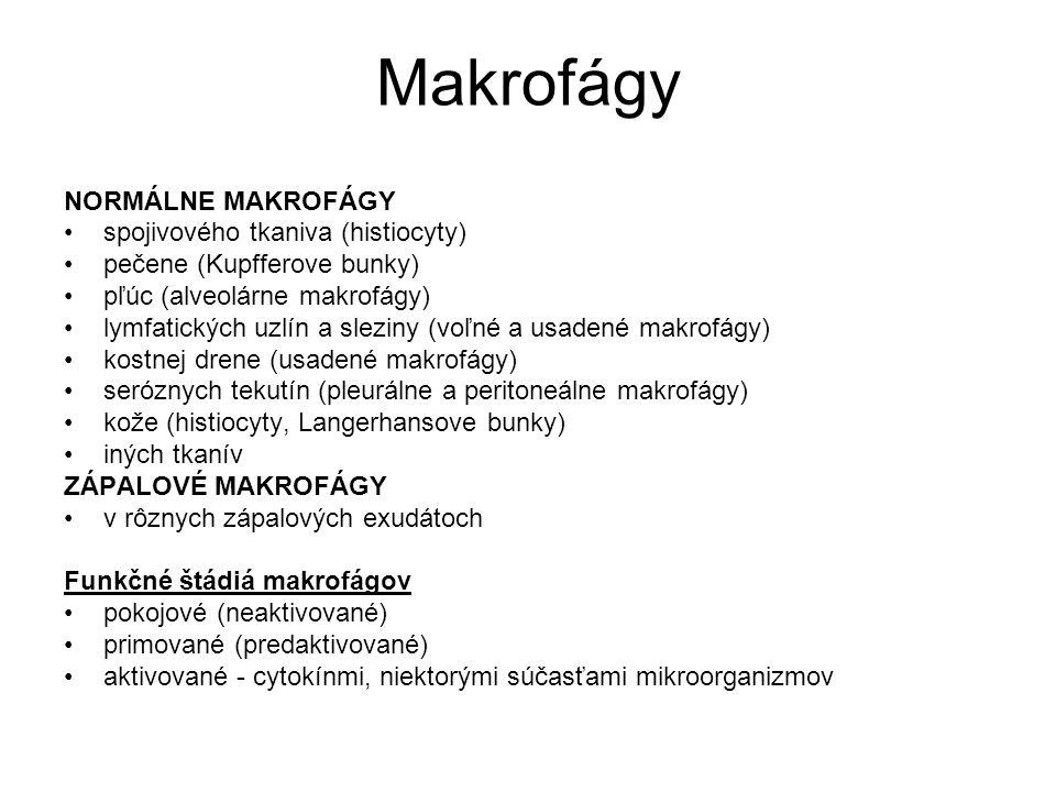 Makrofágy NORMÁLNE MAKROFÁGY spojivového tkaniva (histiocyty)