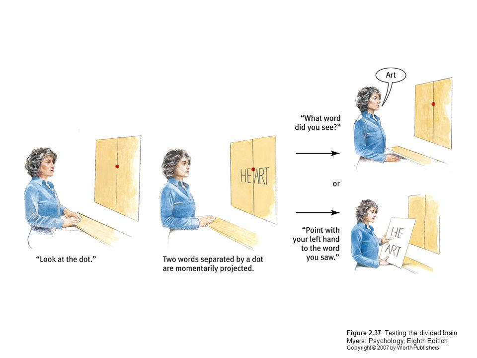 Figure 2.37 Testing the divided brain Myers: Psychology, Eighth Edition Copyright © 2007 by Worth Publishers