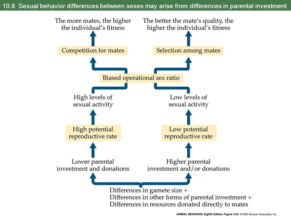 10.8 Sexual behavior differences between sexes may arise from differences in parental investment