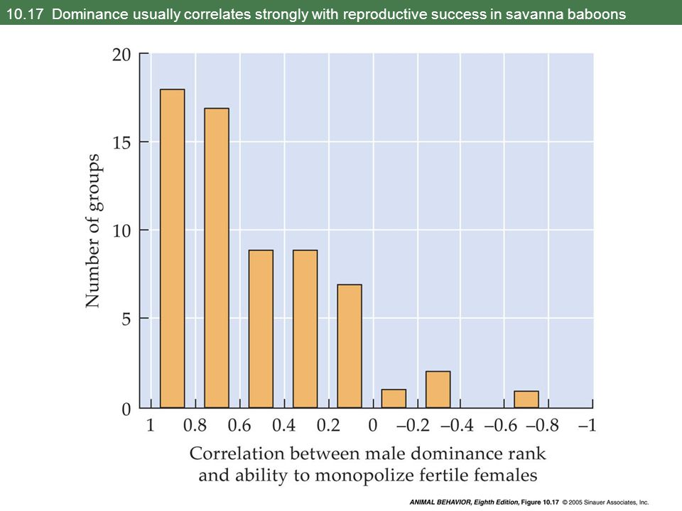 10.17 Dominance usually correlates strongly with reproductive success in savanna baboons