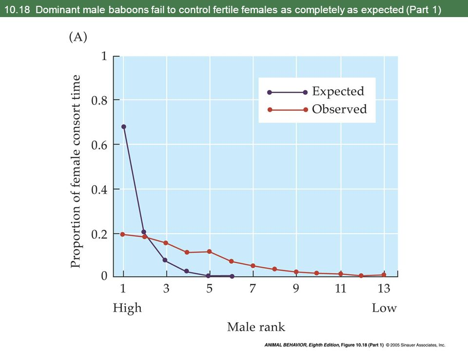 10.18 Dominant male baboons fail to control fertile females as completely as expected (Part 1)