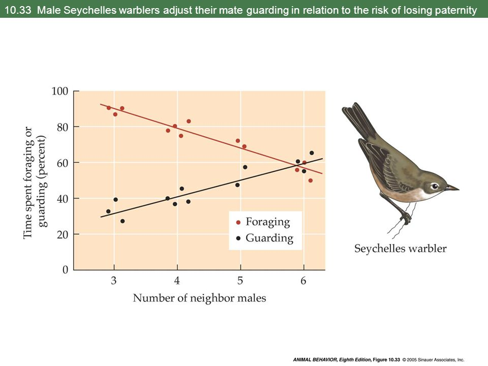 10.33 Male Seychelles warblers adjust their mate guarding in relation to the risk of losing paternity
