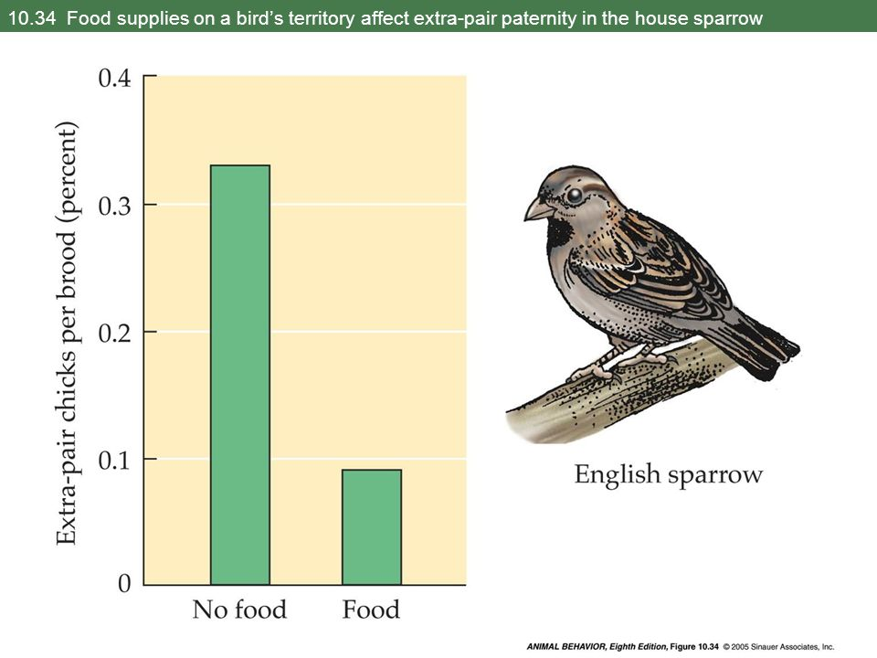 10.34 Food supplies on a bird's territory affect extra-pair paternity in the house sparrow