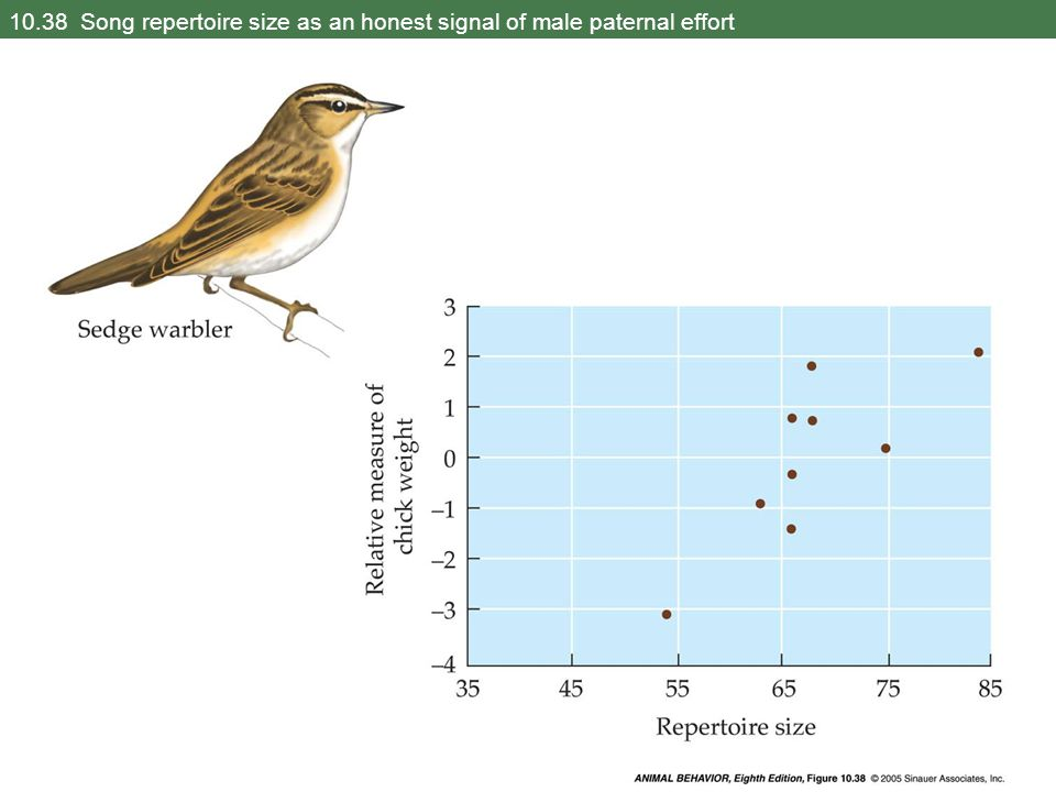 10.38 Song repertoire size as an honest signal of male paternal effort