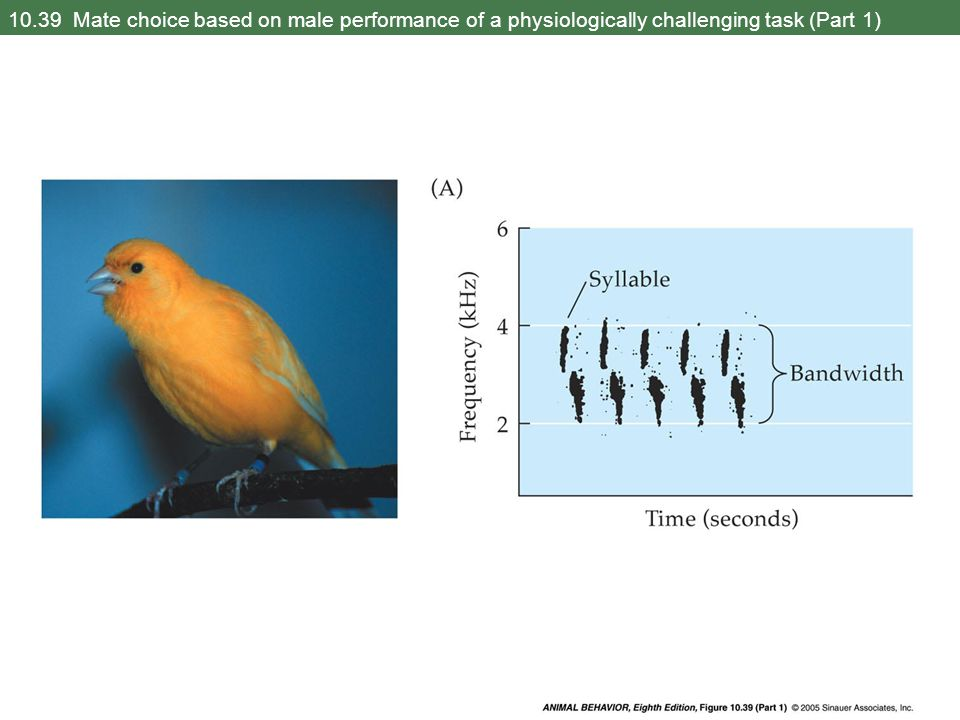 10.39 Mate choice based on male performance of a physiologically challenging task (Part 1)
