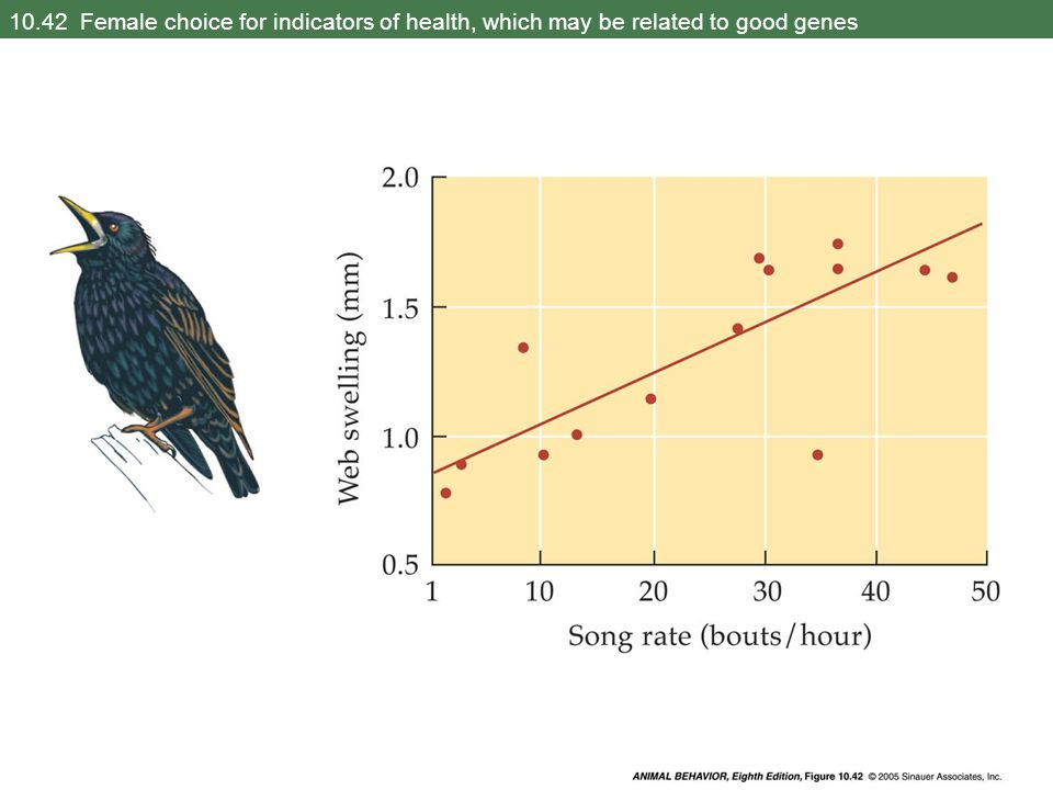 10.42 Female choice for indicators of health, which may be related to good genes