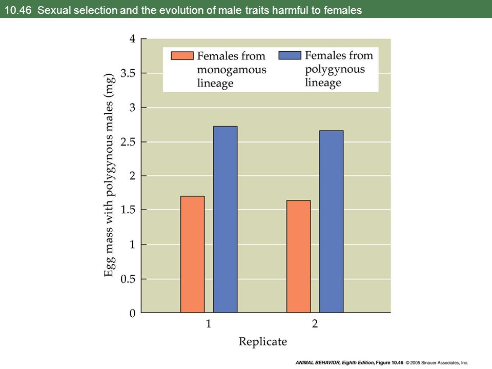 10.46 Sexual selection and the evolution of male traits harmful to females