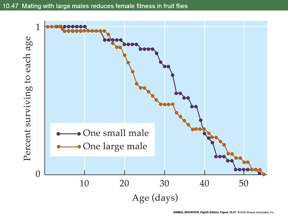 10.47 Mating with large males reduces female fitness in fruit flies