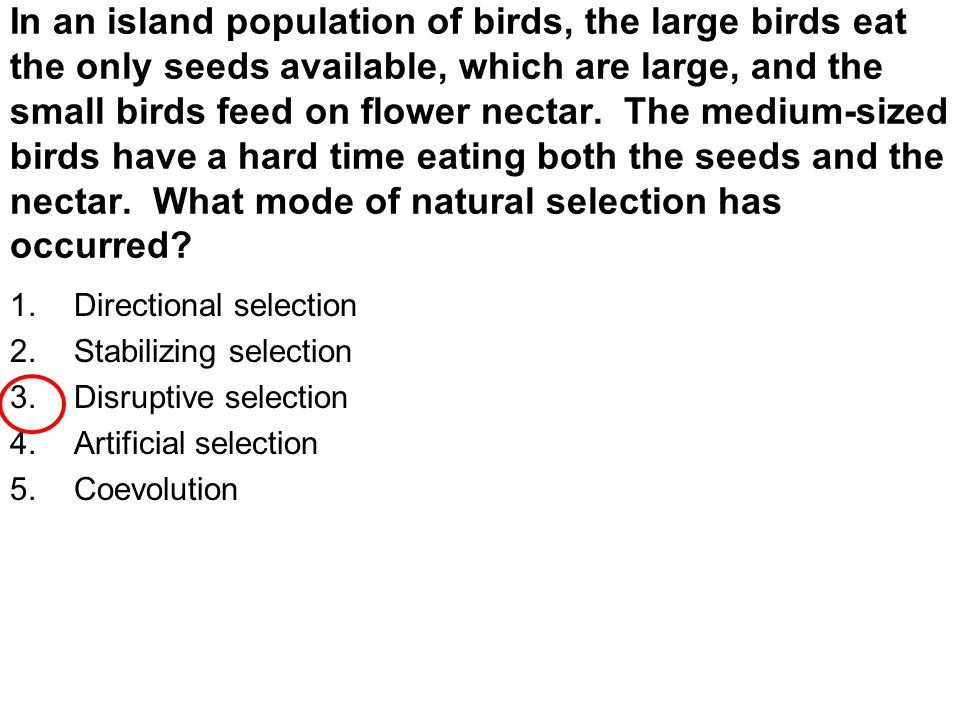 In an island population of birds, the large birds eat the only seeds available, which are large, and the small birds feed on flower nectar. The medium-sized birds have a hard time eating both the seeds and the nectar. What mode of natural selection has occurred