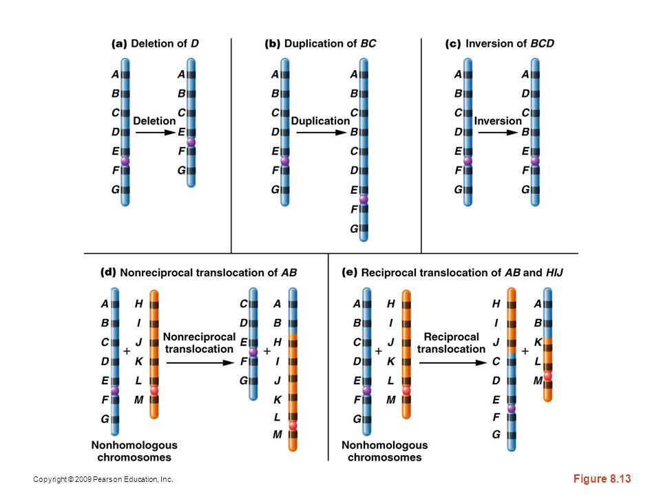 Figure 8-14 Overview of the five different types of rearrangement of chromosome segments.