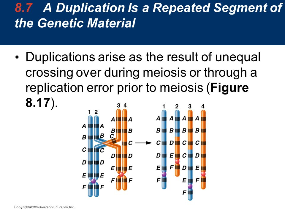 8.7 A Duplication Is a Repeated Segment of the Genetic Material