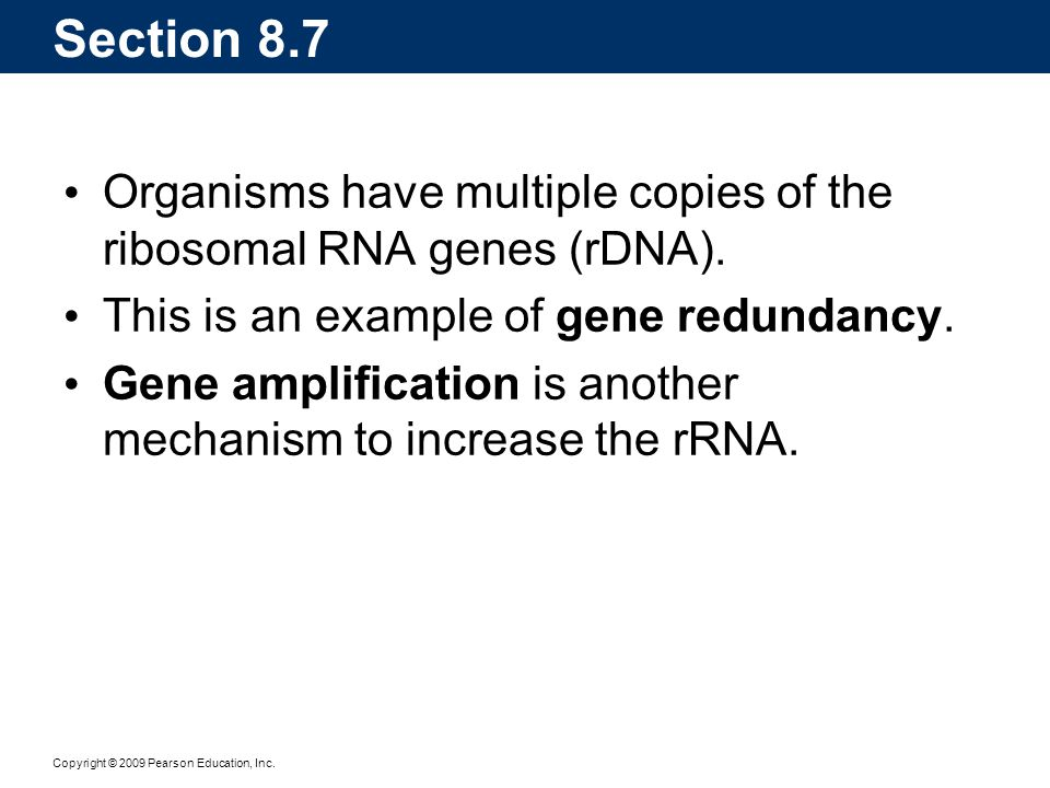 Section 8.7 Organisms have multiple copies of the ribosomal RNA genes (rDNA). This is an example of gene redundancy.