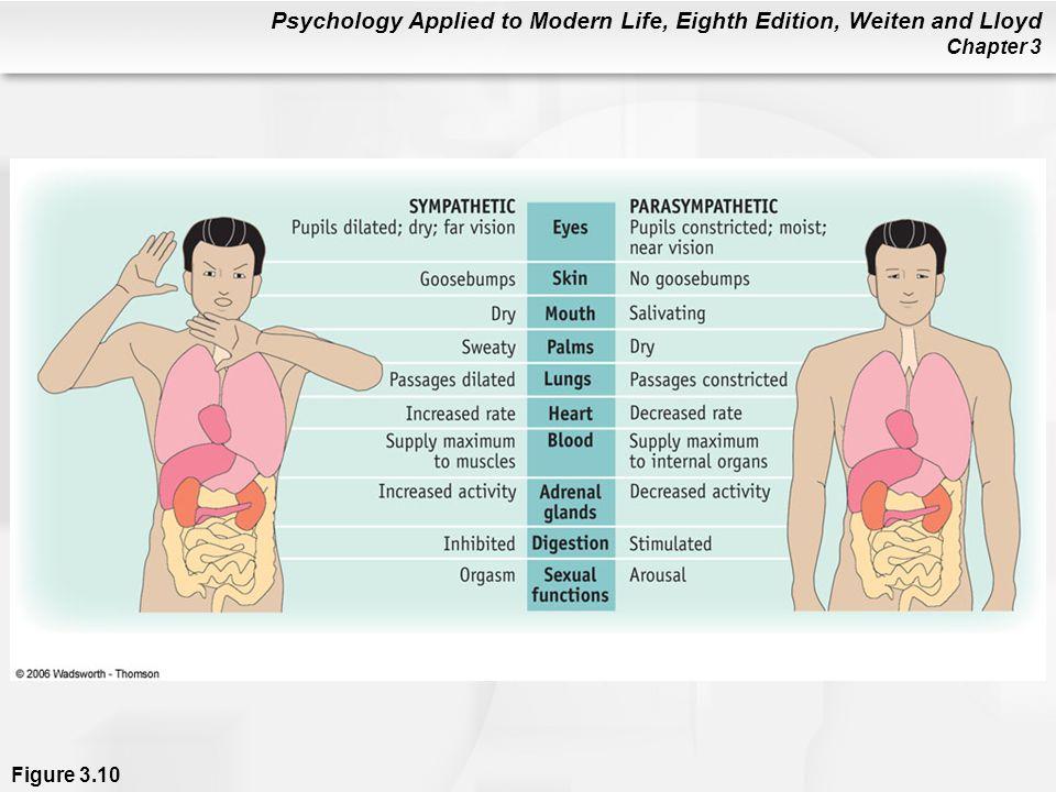 Figure 3. 10 The Autonomic Nervous System (ANS)