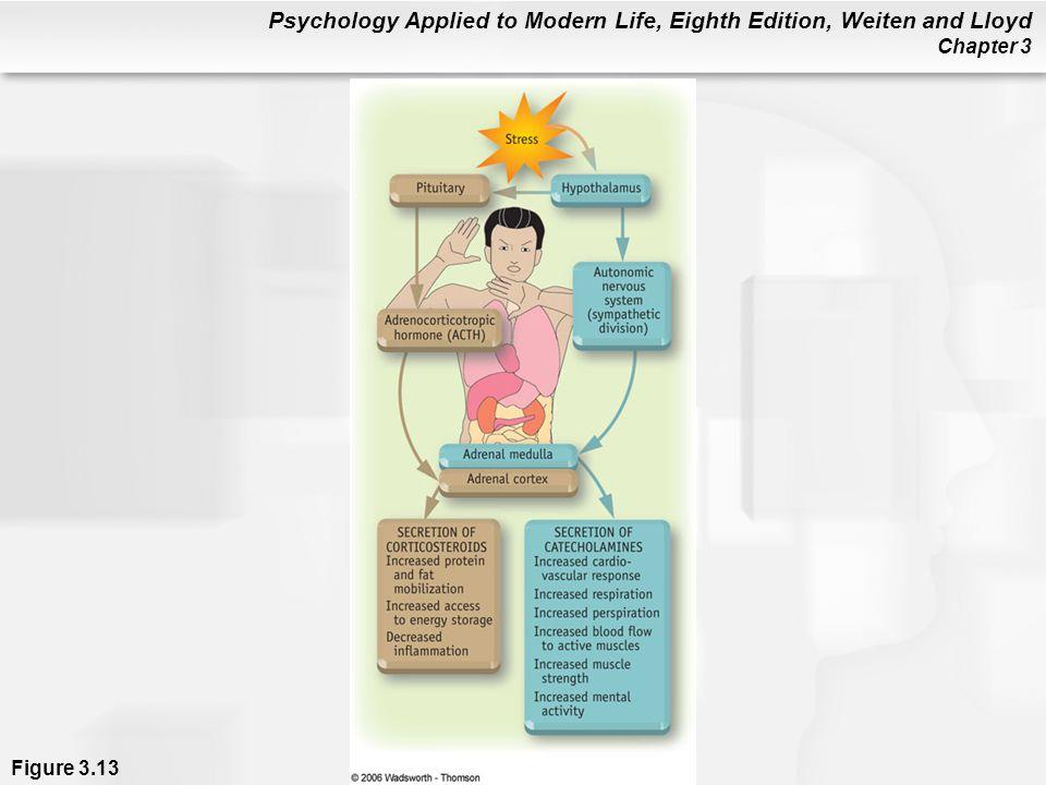 Figure 3. 13 Brain-body pathways in stress
