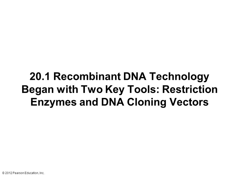 20.1 Recombinant DNA Technology Began with Two Key Tools: Restriction Enzymes and DNA Cloning Vectors