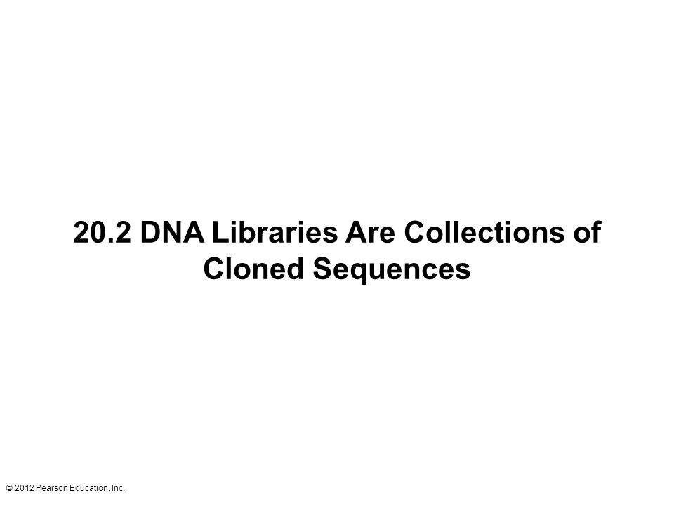 20.2 DNA Libraries Are Collections of Cloned Sequences