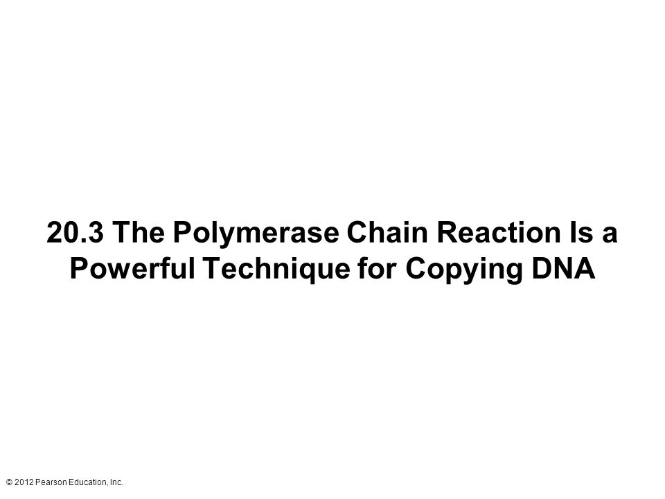 20.3 The Polymerase Chain Reaction Is a Powerful Technique for Copying DNA