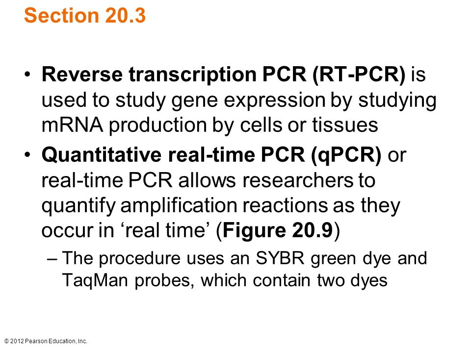 Section 20.3 Reverse transcription PCR (RT-PCR) is used to study gene expression by studying mRNA production by cells or tissues.