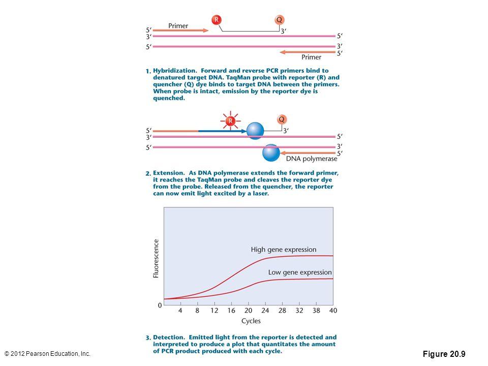 Figure 20.9 © 2012 Pearson Education, Inc.