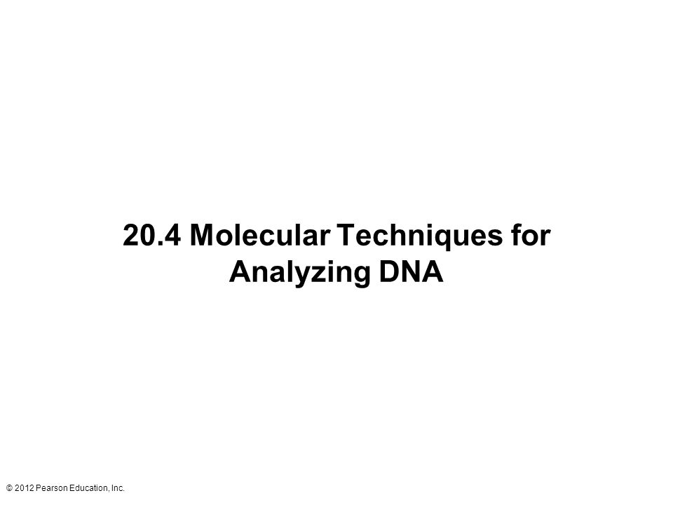 20.4 Molecular Techniques for Analyzing DNA
