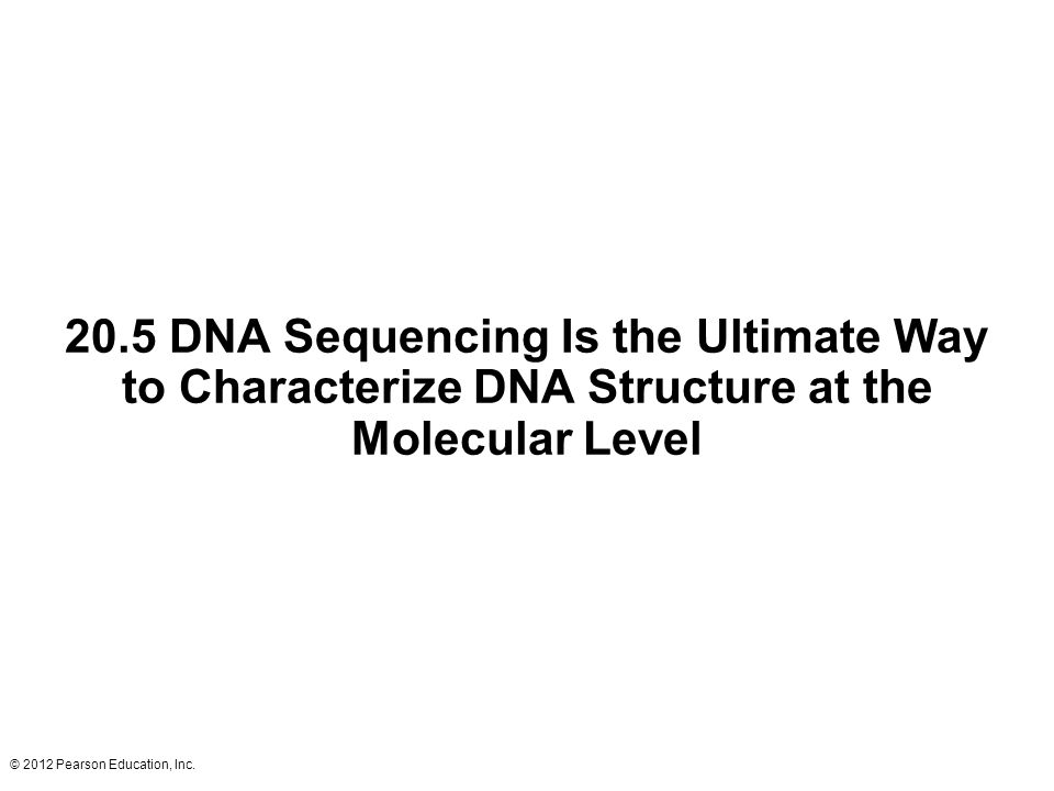 20.5 DNA Sequencing Is the Ultimate Way to Characterize DNA Structure at the Molecular Level