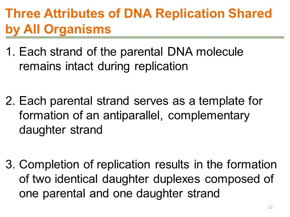 Three Attributes of DNA Replication Shared by All Organisms