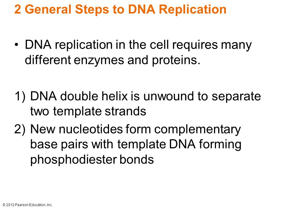 2 General Steps to DNA Replication