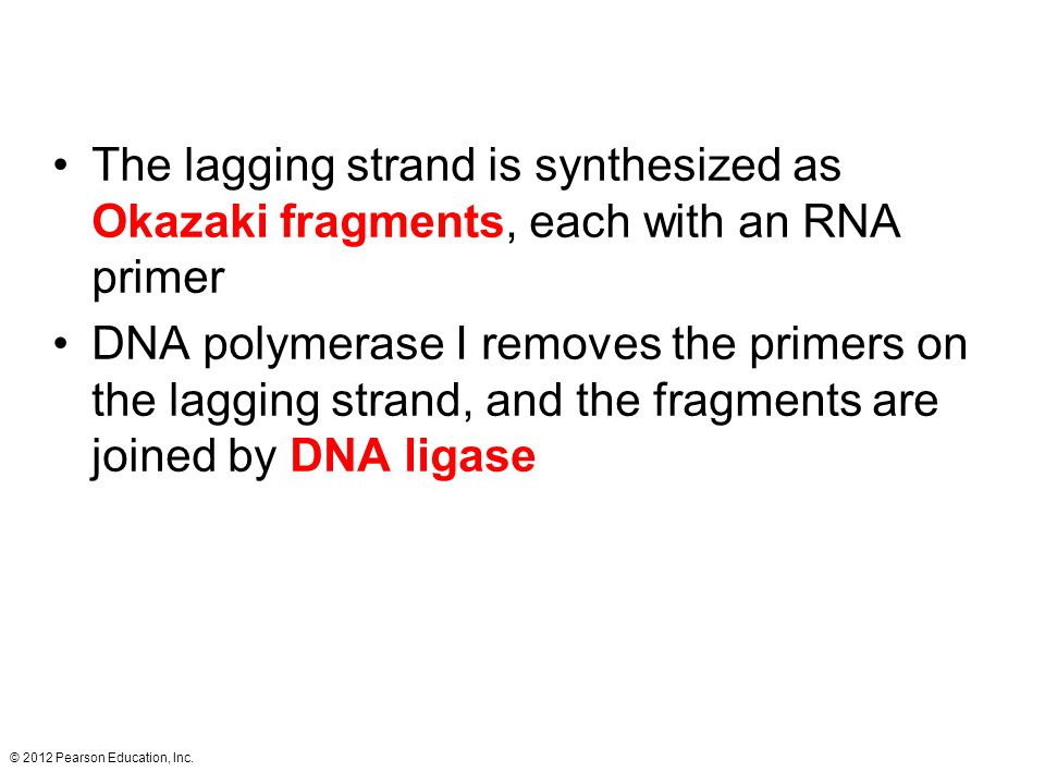 The lagging strand is synthesized as Okazaki fragments, each with an RNA primer