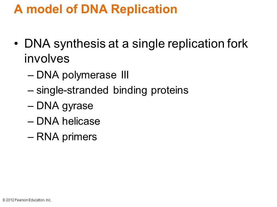 A model of DNA Replication